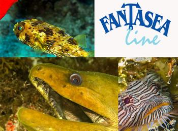 Marla Goodman Underwater Photography – Canon G16/Fantasea Kit