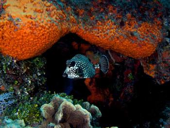 Ted Janssen Underwater Photography