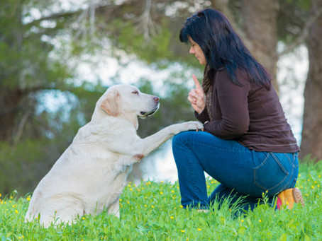 The Importance of Training Your Senior Dog