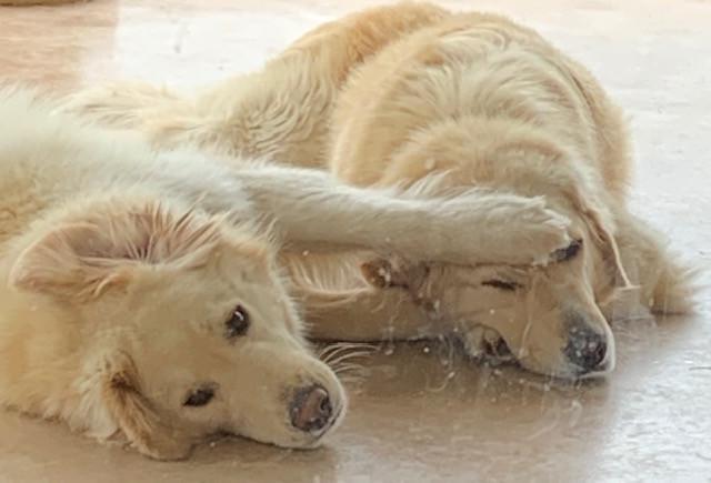 Winnie&Lucy Coupe.jpg