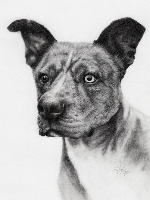 "8x10"" Mounted Graphite Pet Portrait Head and Shoulders"
