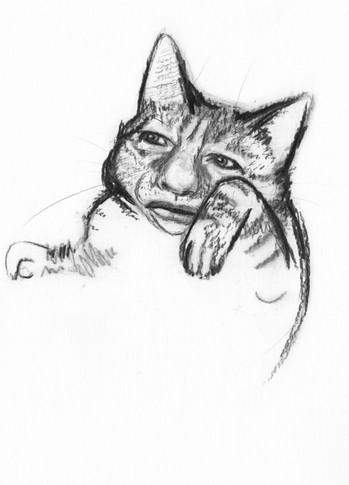 Kitty Gervais