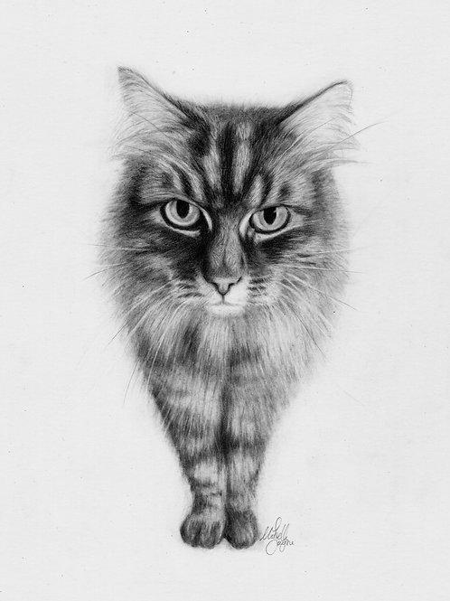 "Medium (10x12"") Mounted Graphite Pet Portrait Head and Shoulders"