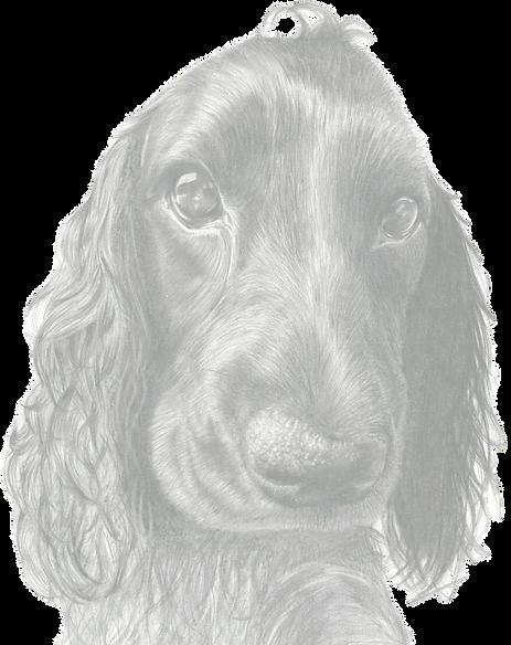 Pet Portrait in Pencil by Michelle Jayne Turner