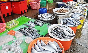 シラチャ市場魚