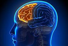 Prefrontal Cortex Activity Predicts Mental Fatigue