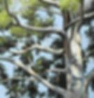 eukalyptus wall mural