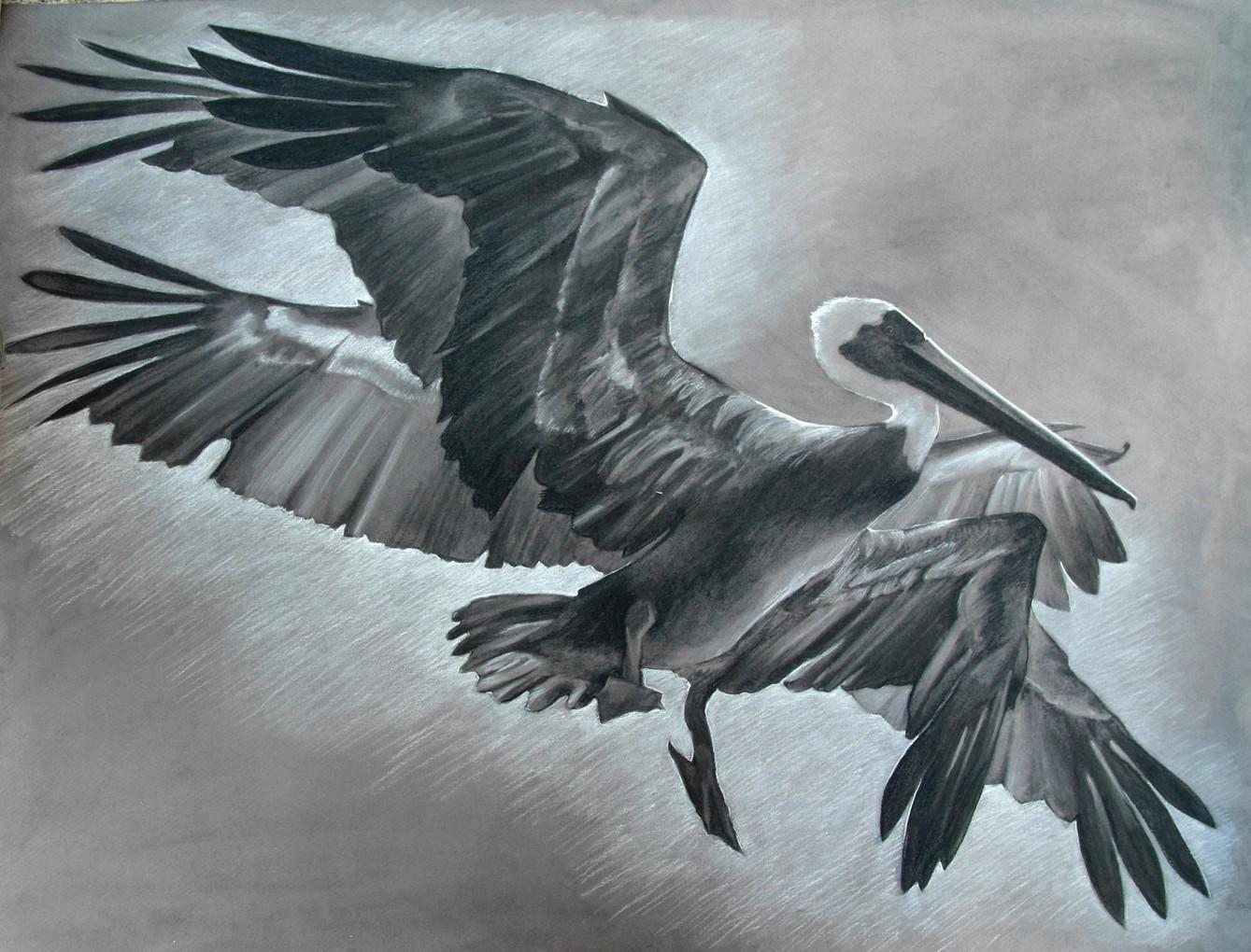 Pelican In Motion