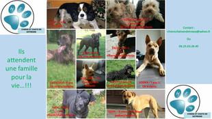 Regroupement de nos chiens à l'adoption