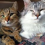 Filou et Duchesse.jpg