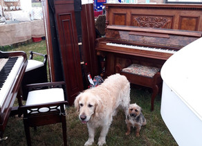 Ritmuller antique walnut upright piano