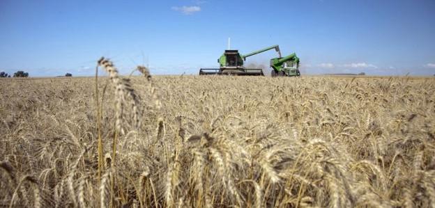 Se espera la peor cosecha de trigo en 5 años