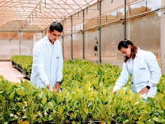 BASF impulsa la innovación para una agricultura cada vez más sustentable