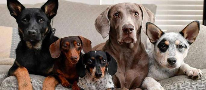 Día mundial del perro: ¿Por qué se celebra el 21 de julio?
