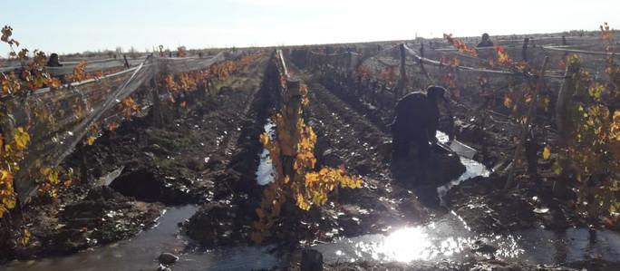Vitivinicultura Sostenible 4.0: Productores de San Rafael y la COVIAR obtuvieron financiamiento