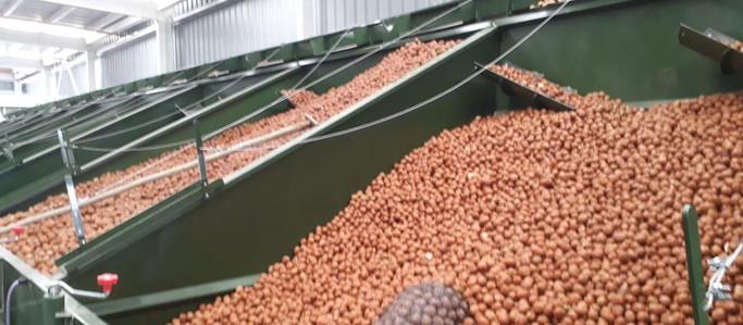 El Grupo Metropol invirtió U$S 2.1 millones en una nueva planta de secado de nueces para exportación