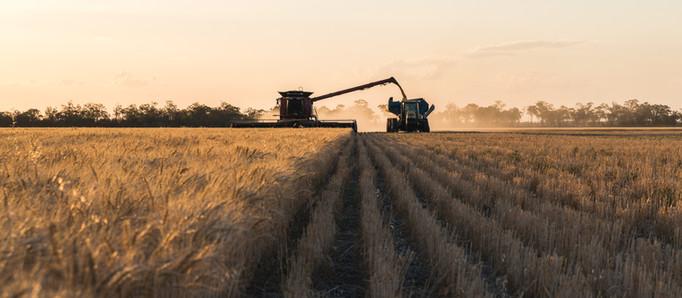 Nuevo herbicida de BASF