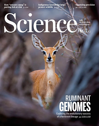 Science cover-ruminant project.jpg