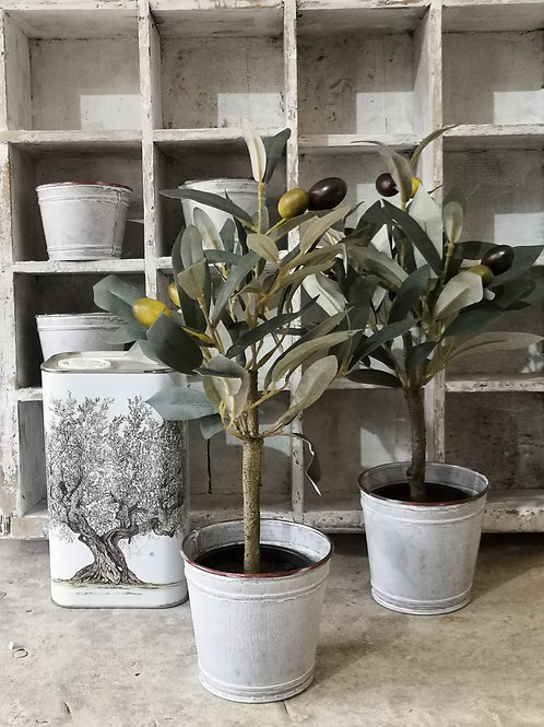 Casa Verde Set of Two Olive Tree in Pot