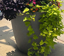 plants growing in large pot on sidewalk