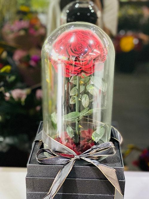 Everlasting Rose Dark Red
