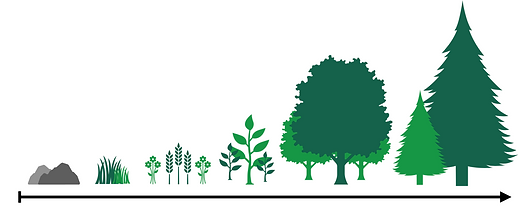Ecological Succession.png