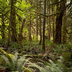 cascadesforest1 (1 of 1).jpg
