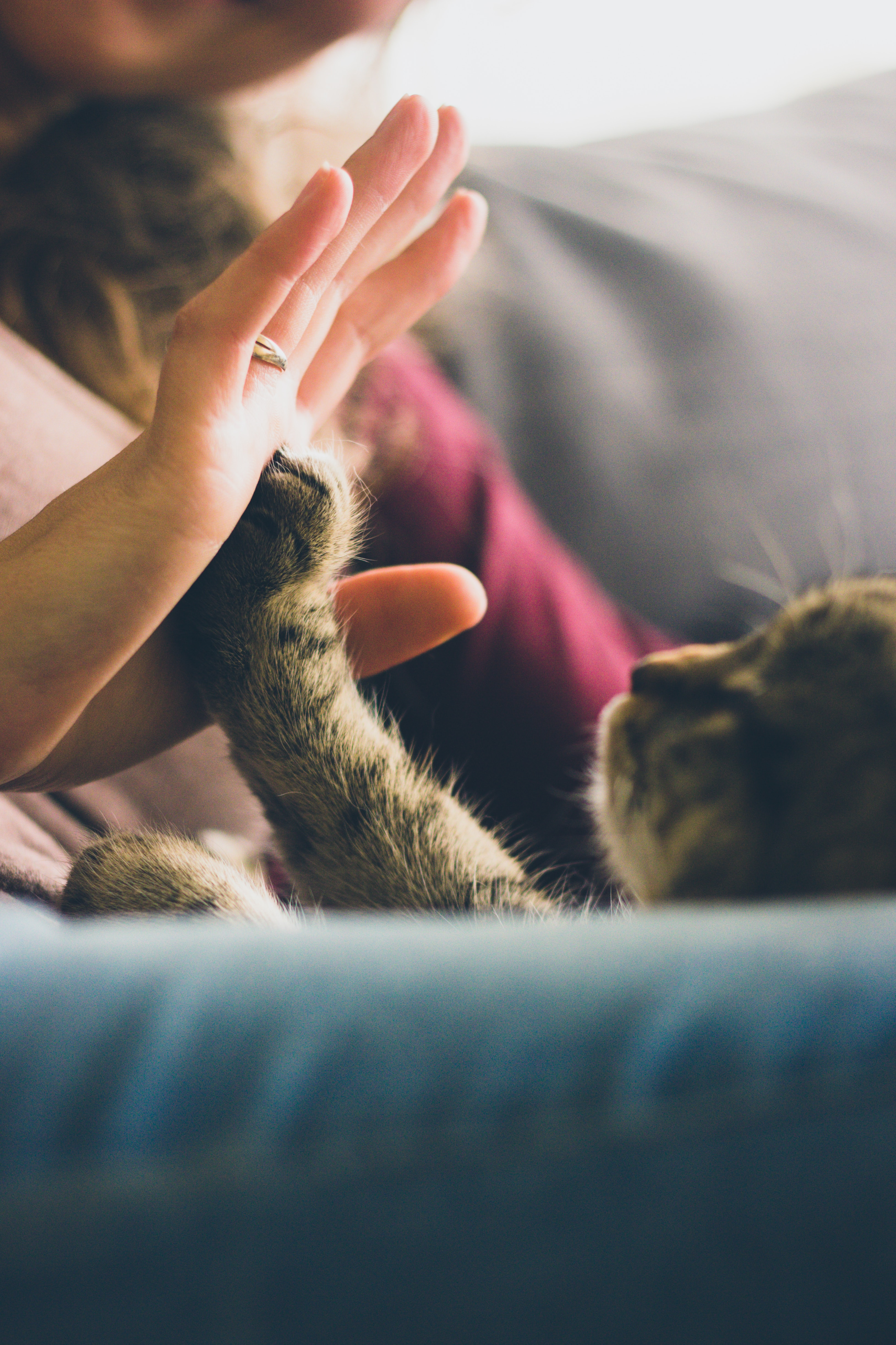 Animal Communication & Healing