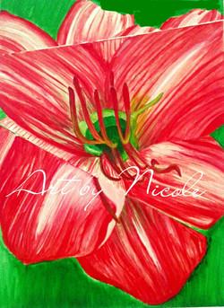 """""""Une Fleur"""" (A Flower)"""