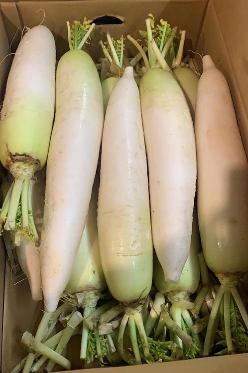 日本🇯🇵北海道 十勝大根蘿蔔 $38/條