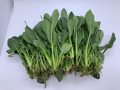 新產品 菠菜苗