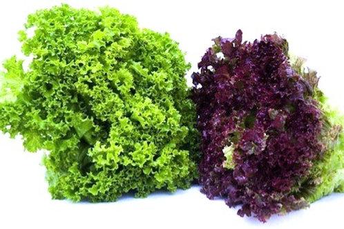本地新鮮即割沙律菜 綠翡翠 $38/磅