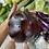Thumbnail: 本地新鮮即割太空茄$32/斤