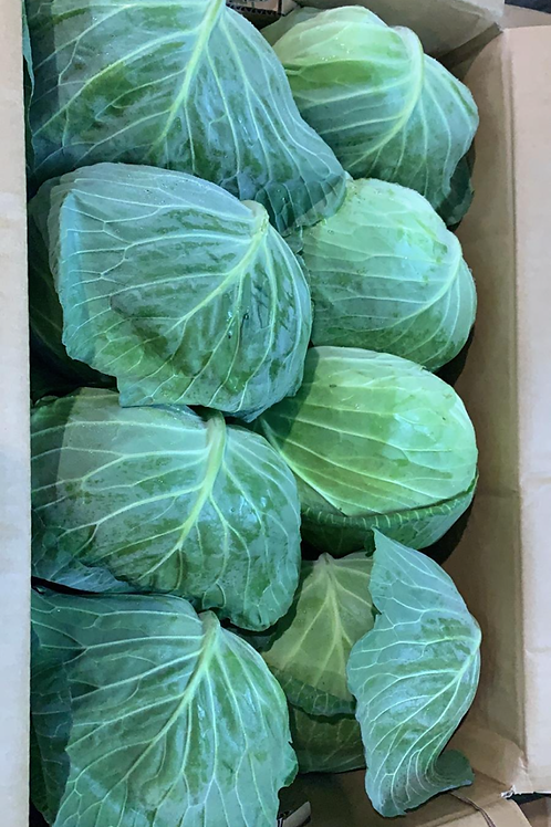 日本長野縣扁椰菜 $60/個 (可以生食)