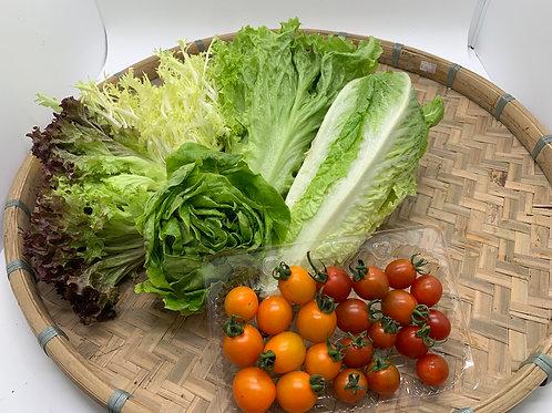 本地新鮮即割沙律菜套裝連車厘茄