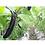 Thumbnail: 本地新鮮即割茄子$32/斤