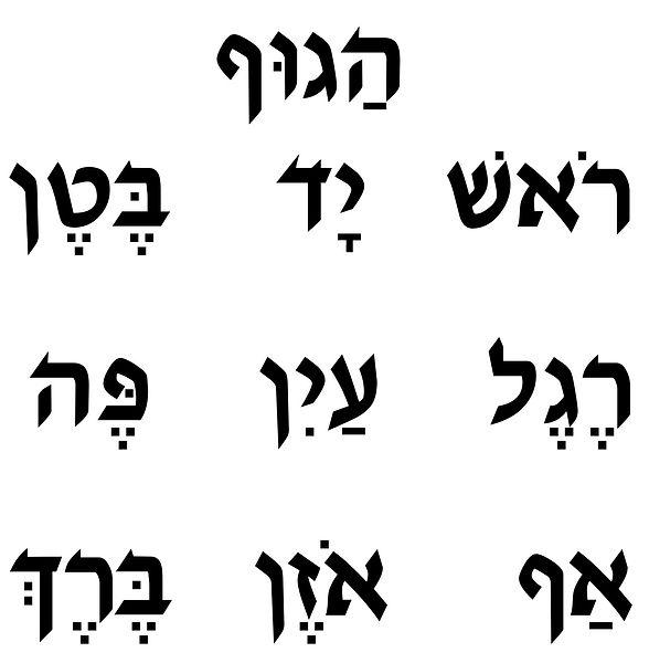 body parts Hebrew.jpg