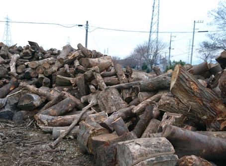 薪畑に続々原木入荷