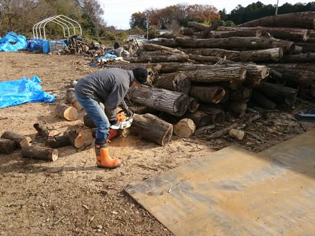 駒寺の薪畑で薪作り放題