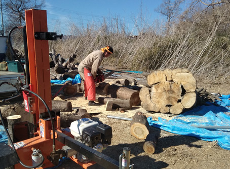 薪畑で薪作り