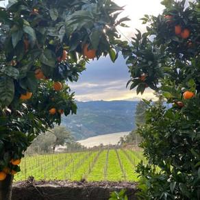 Vinho Verde Wine Study Trip