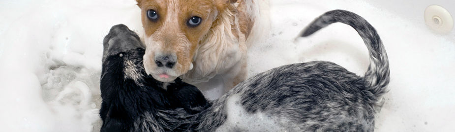 Poland Shaw Dog Supplies Baton Rouge
