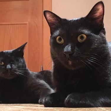 Pirata y Blackia