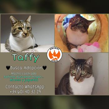 adopta Taffy