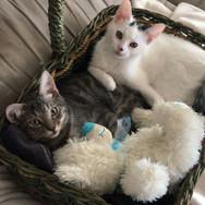 Tristan y Coco