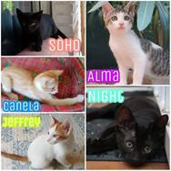 Sopho, Canalea, Jeffry, ALma y Night