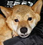 保護犬レスキュー