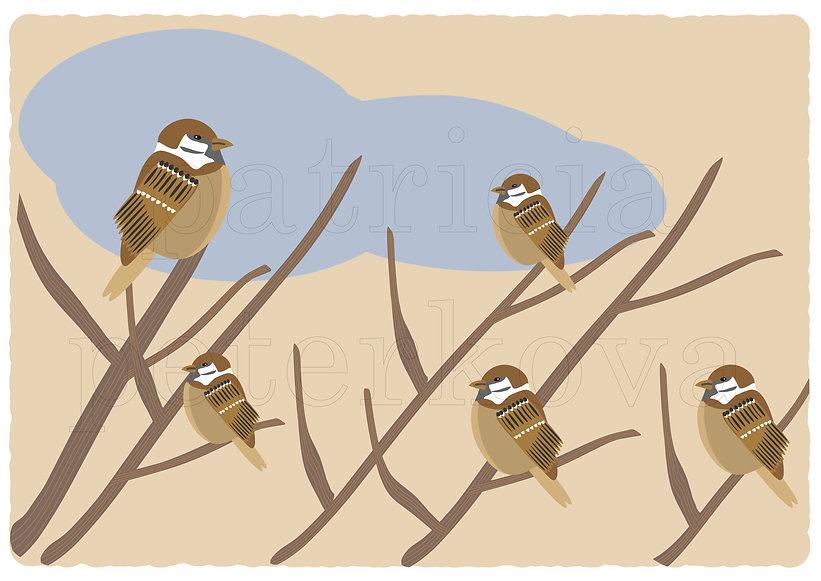 sparrow2-01.jpg