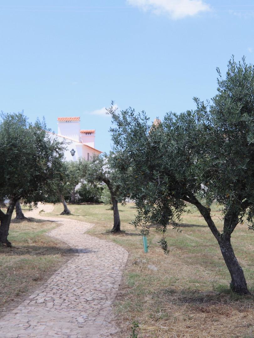 Quinta do Briano