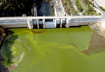algae2